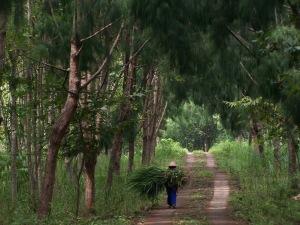 hutan_wanagama_playen